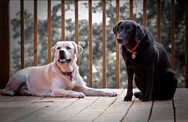 Dois cães felizes imagem de stock royalty free