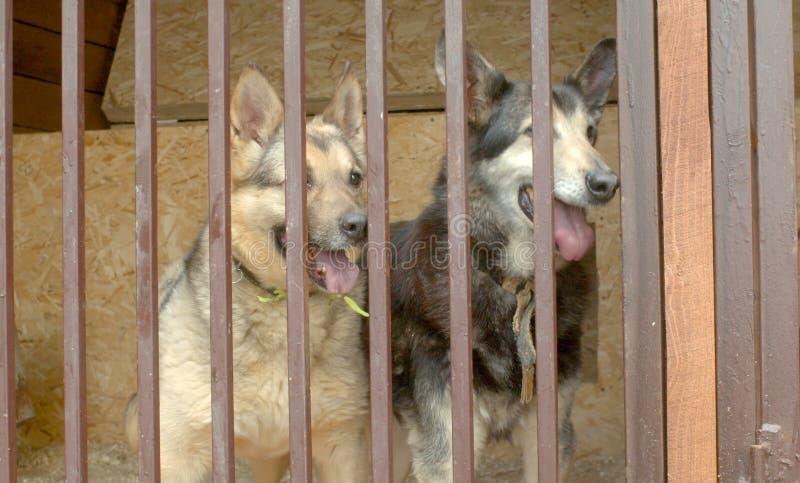 Dois cães na espera do abrigo de um cão foto de stock