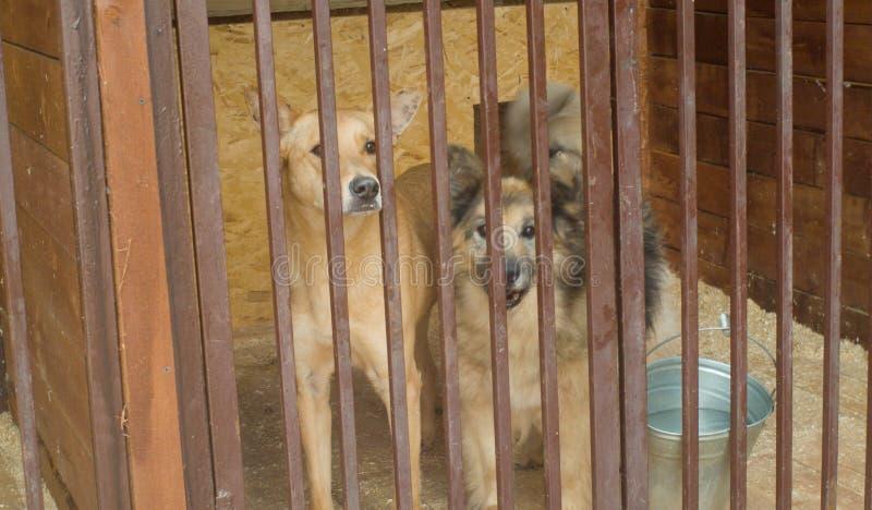 Dois cães na espera do abrigo de um cão foto de stock royalty free