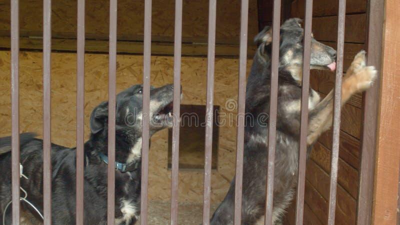 Dois cães na espera do abrigo de um cão imagem de stock
