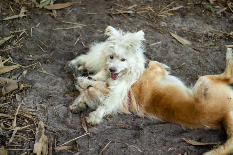 Dois cães que jogam o divertimento imagens de stock royalty free