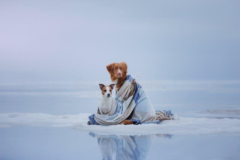 Dois cães que sentam-se no gelo fotografia de stock