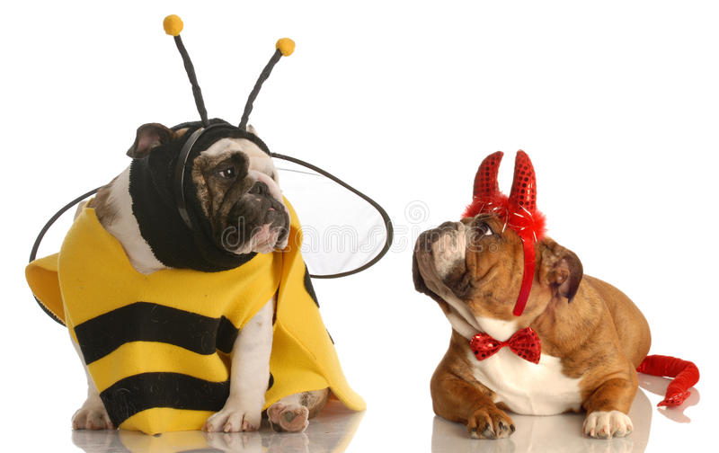Dois cães vestiram-se para Halloween foto de stock royalty free