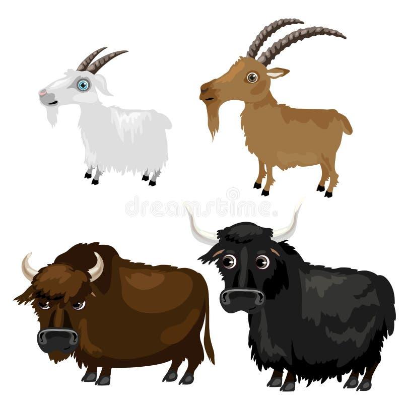 Dois cabras e búfalos das raças no fundo branco ilustração do vetor
