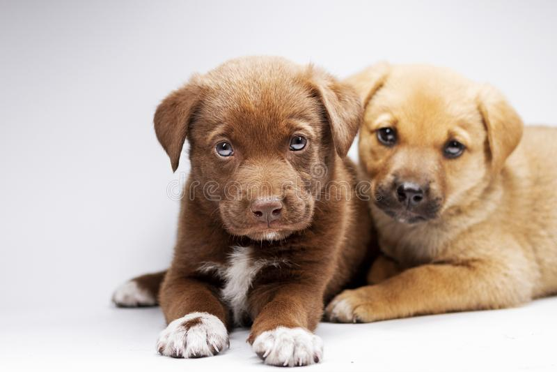 Dois cachorrinhos bonitos em um fundo branco fotografia de stock royalty free