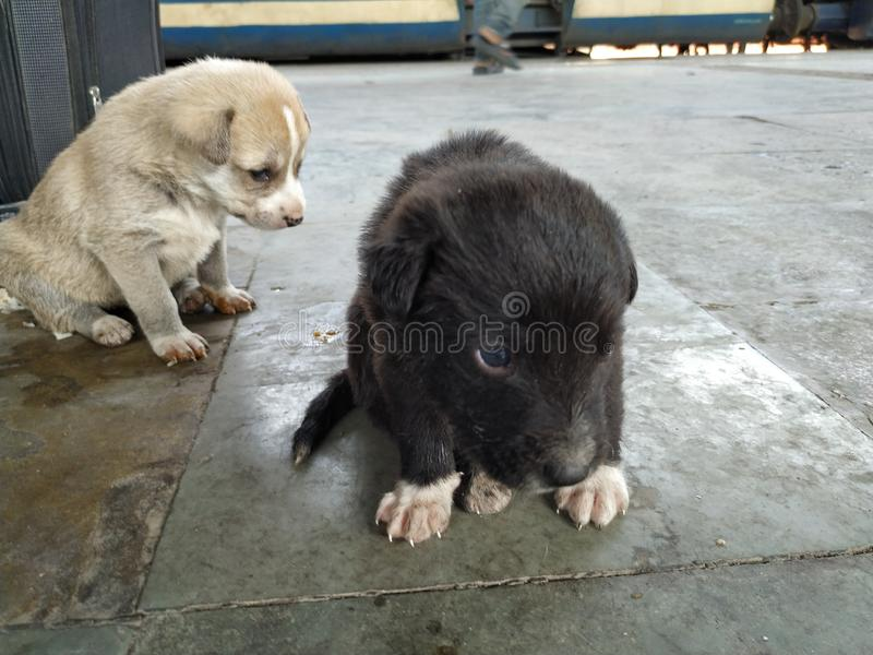 Dois cachorrinhos brancos pretos bonitos fotos de stock