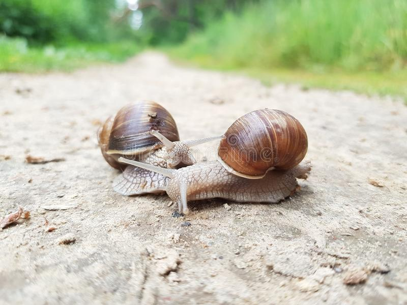 Dois caracóis na estrada de floresta imagem de stock
