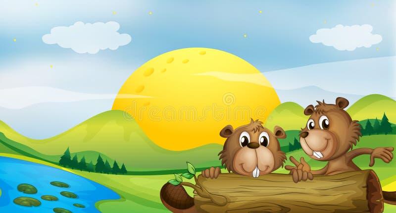 Dois castores no riverbank ilustração royalty free
