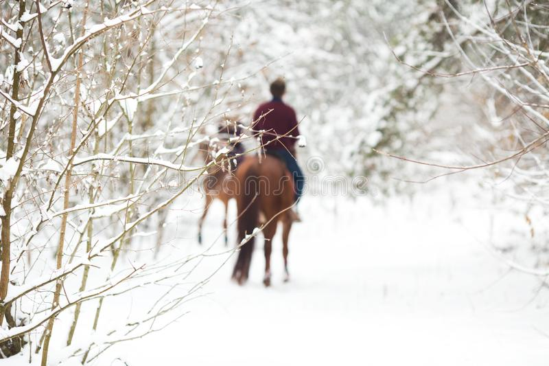 Dois cavaleiros nos cavalos marrons na neve, vista traseira imagem de stock royalty free