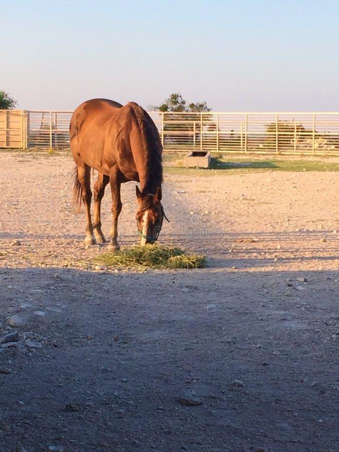 dois cavalos imagem de stock