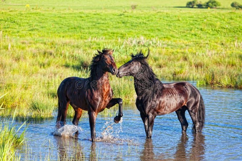 Dois cavalos bonitos imagem de stock
