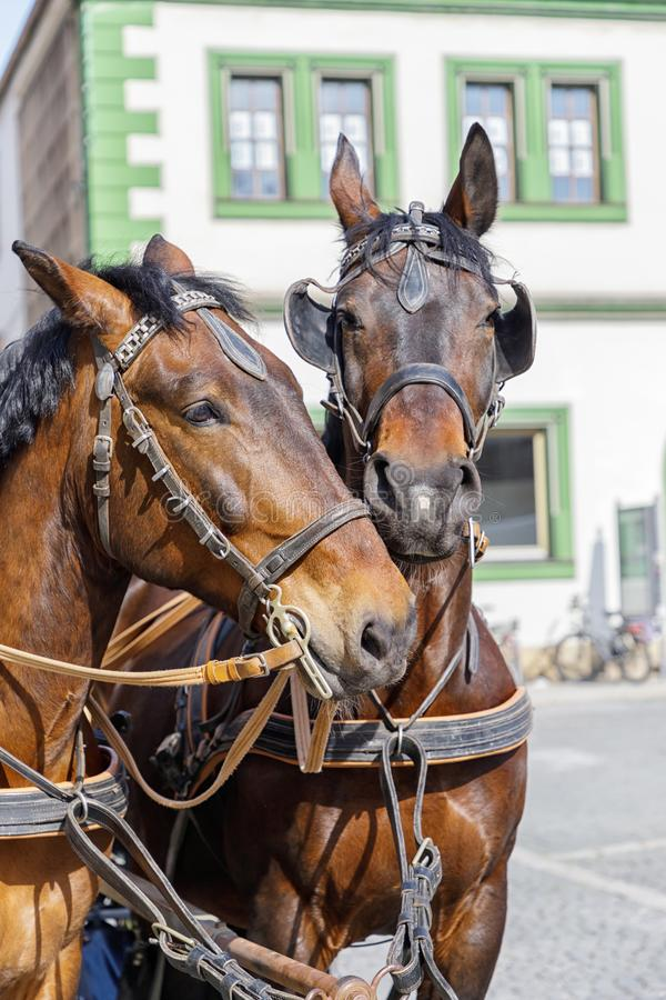 Dois cavalos bonitos no fundo da casa Weimar, Alemanha foto de stock royalty free