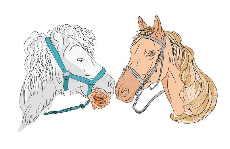 Dois cavalos, um par de bonito e de forte ilustração do vetor