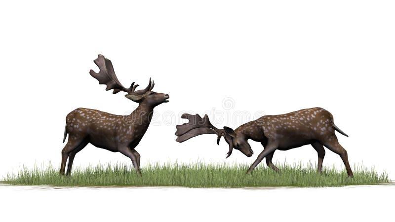 Dois cervos masculinos na grama verde ilustração do vetor