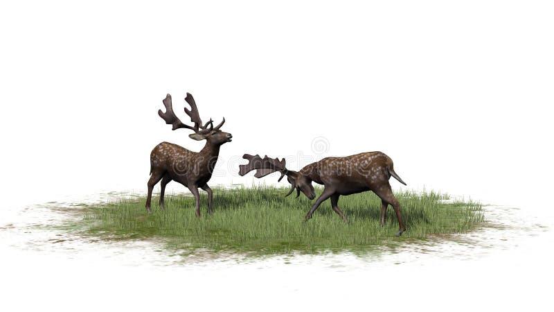 Dois cervos masculinos na grama verde ilustração stock