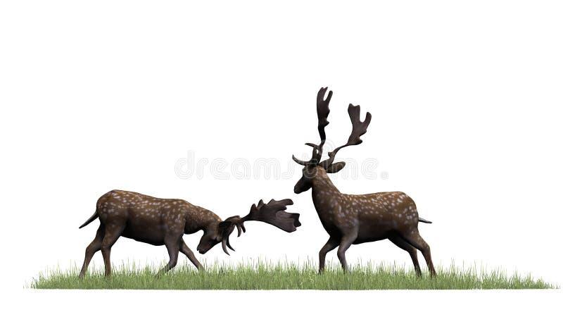 Dois cervos masculinos na grama verde ilustração royalty free