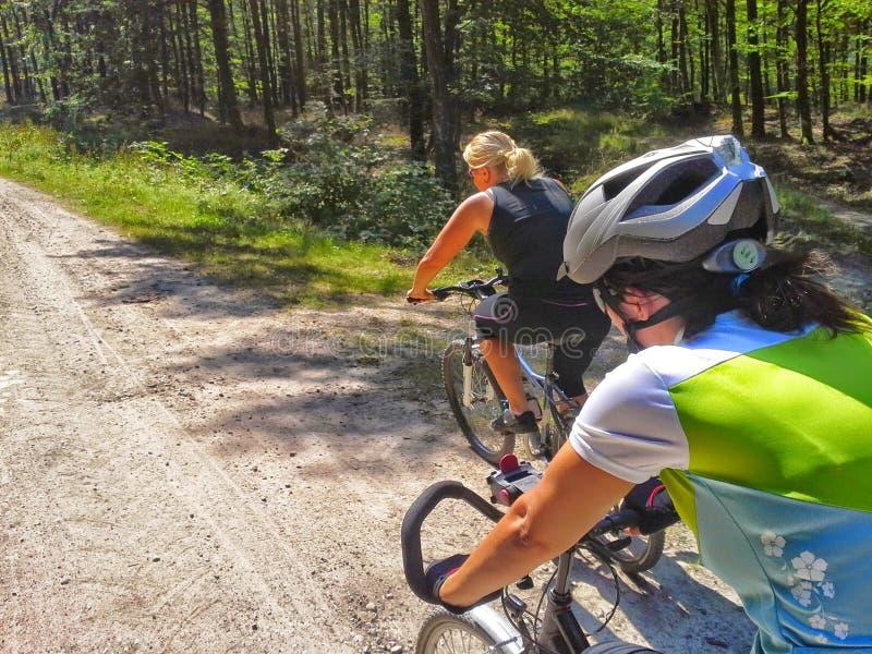 Dois ciclistas nas madeiras foto de stock