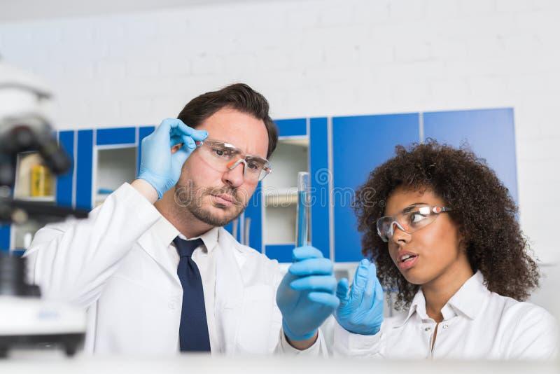 Dois cientistas do laboratório que examinam o líquido no tubo de ensaio, resultados do estudo dos técnicos de laboratório da raça imagens de stock