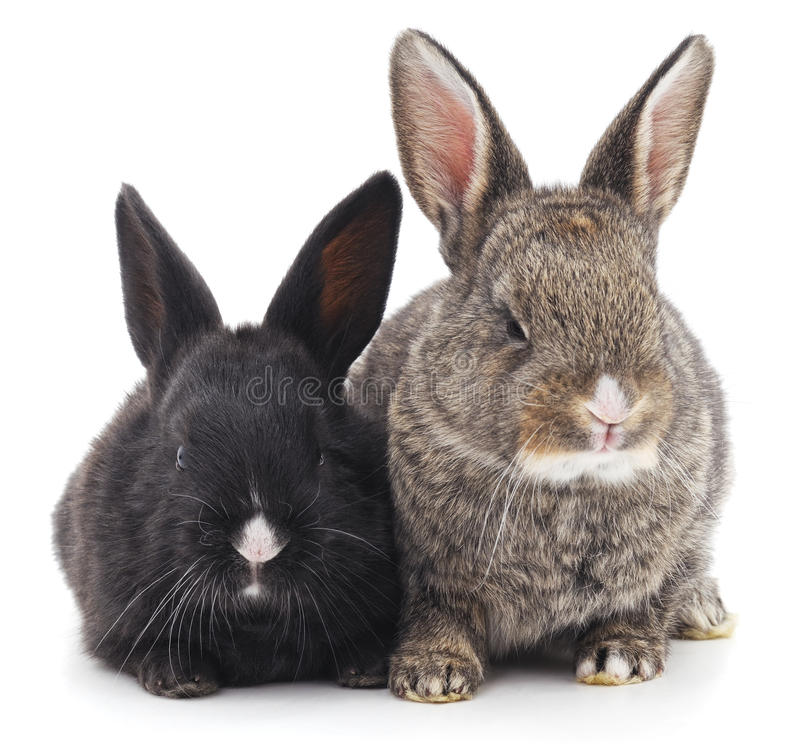 Dois coelhos foto de stock royalty free
