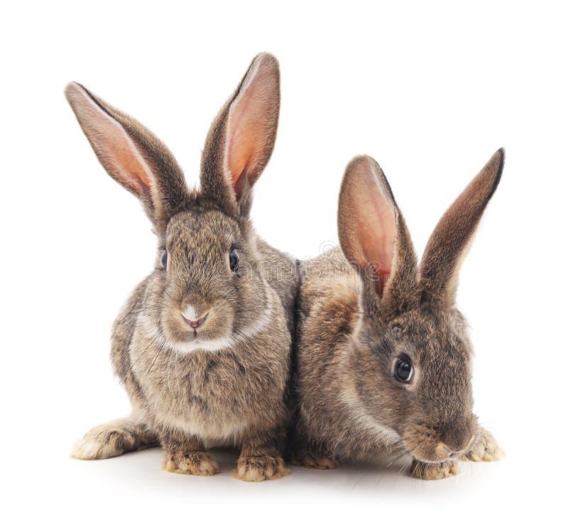 Dois coelhos fotos de stock