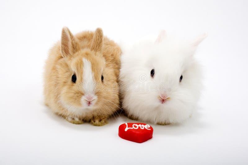Dois coelhos bonitos do bebê fotografia de stock royalty free