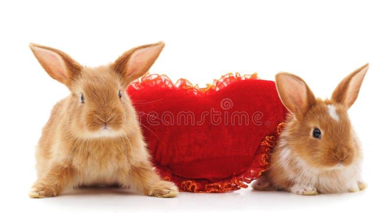Dois coelhos com coração do brinquedo fotografia de stock