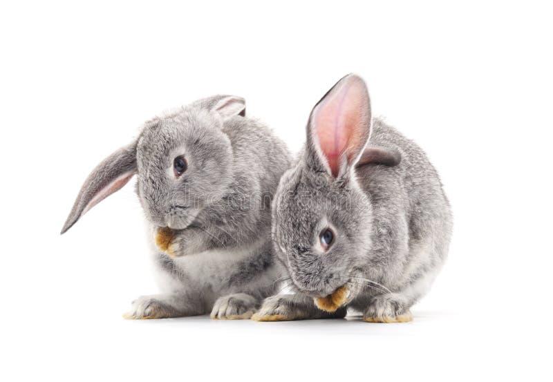 Dois coelhos do bebê imagem de stock royalty free