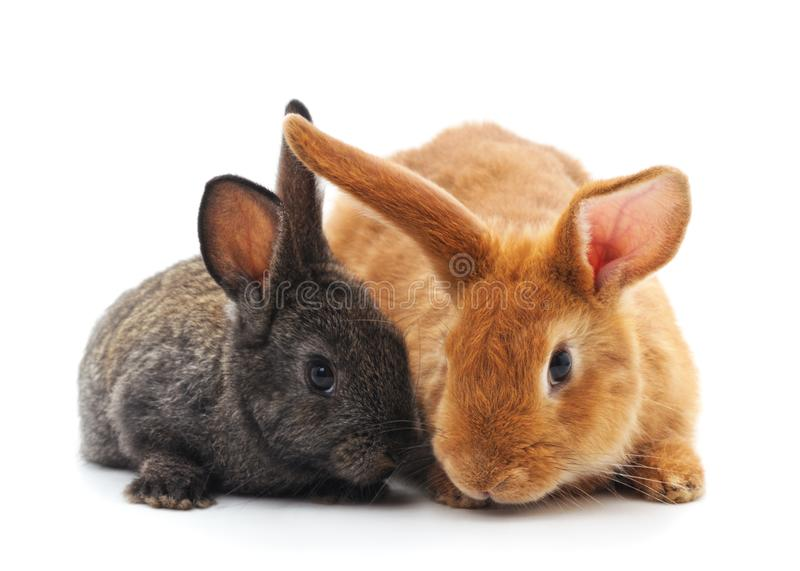Dois coelhos pequenos imagem de stock royalty free