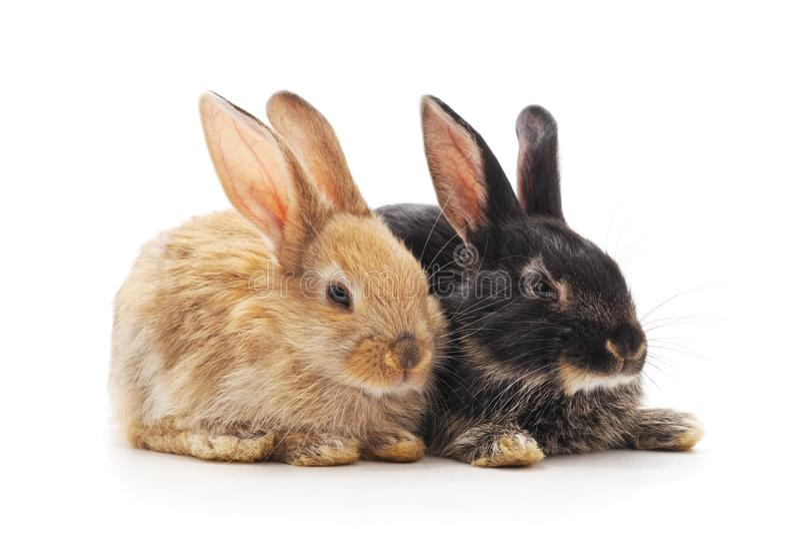 Dois coelhos pequenos imagem de stock