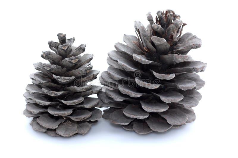 Dois cones grandes do pinho no fundo branco foto de stock royalty free