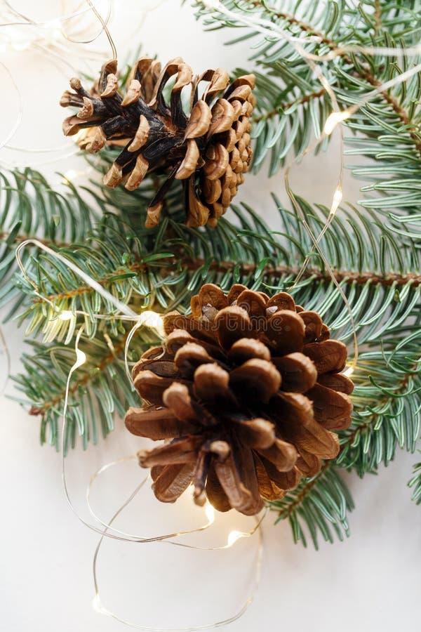 Dois cones marrons grandes no ramo do abeto, em torno da festão imagem de stock