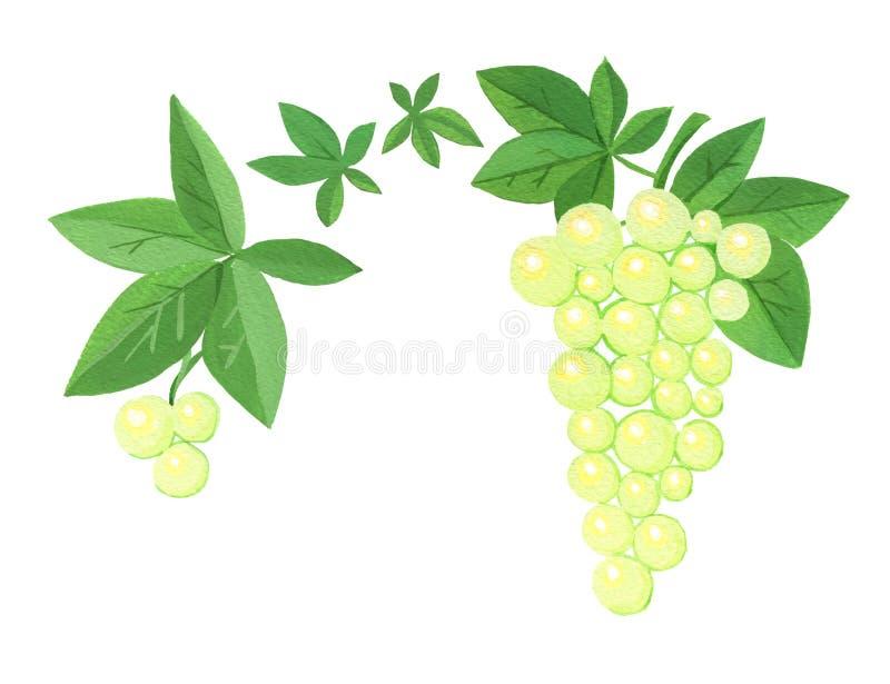 Dois conjuntos de uvas estilizados com folhas ilustração royalty free