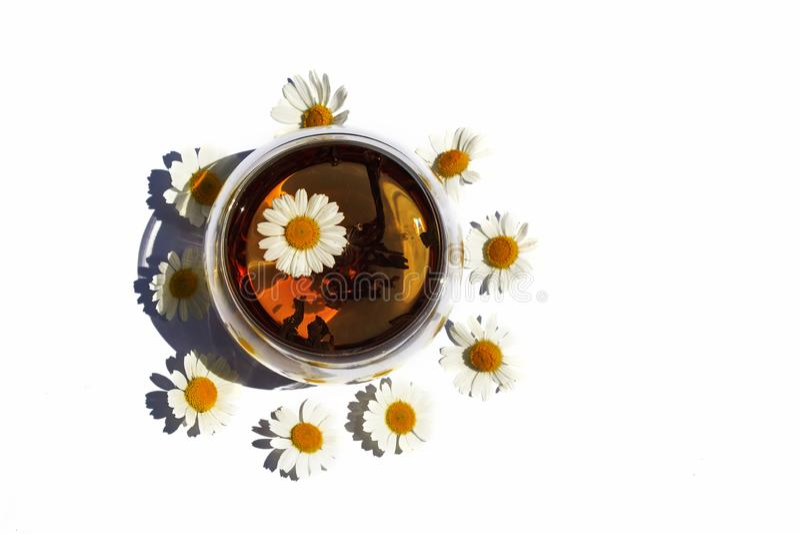 Dois copos ou vidros do chá de camomila em um fundo branco imagens de stock royalty free