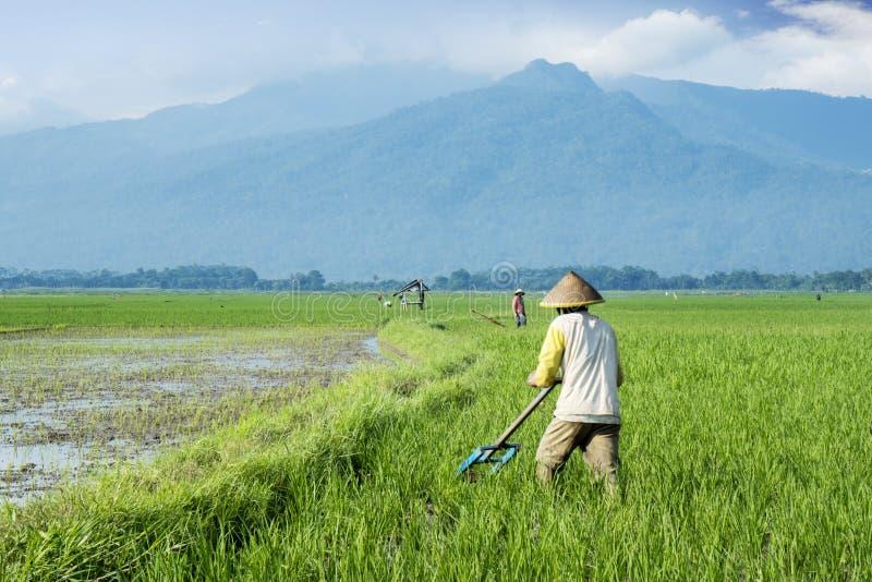 Dois fazendeiros aram a terra com uma ferramenta tradicional imagem de stock royalty free