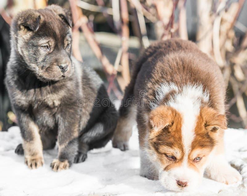 Download Filhote De Cachorro Pequeno Na Neve Imagem de Stock - Imagem de outdoor, cão: 29827095