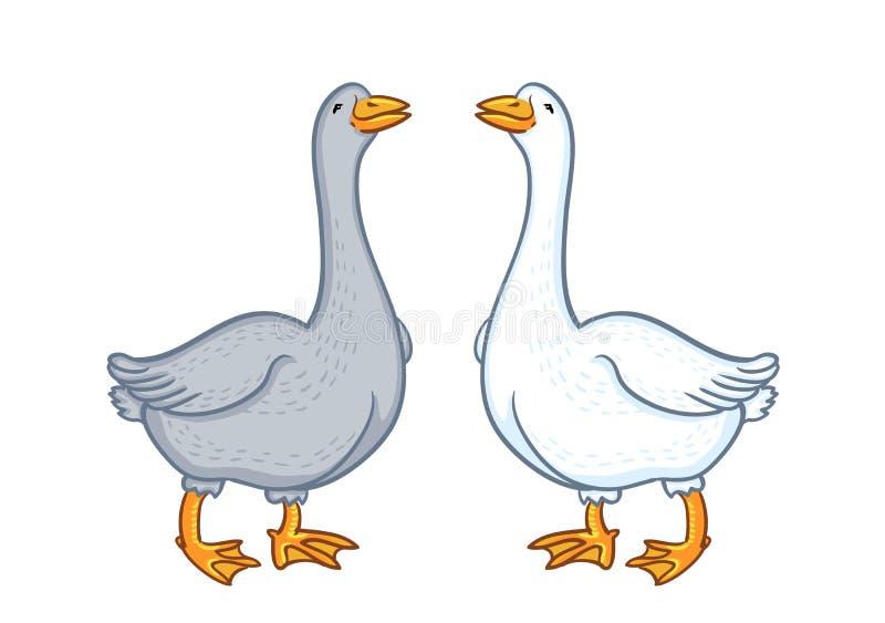 Dois gansos brancos e cinzentos, ganso engraçado dos desenhos animados isolado no fundo branco, caráter doméstico da natureza do  ilustração royalty free