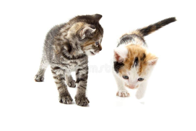 Download Dois gatinhos brincalhão foto de stock. Imagem de retrato - 26523054