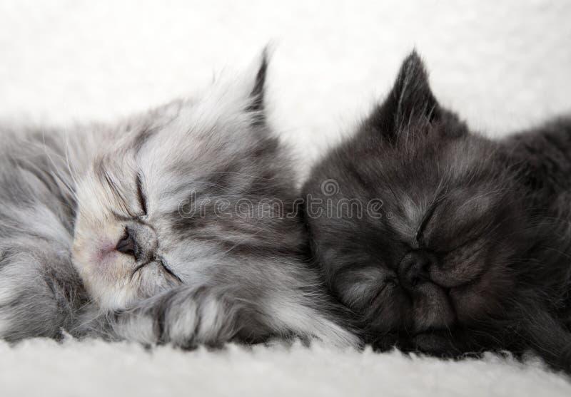 Dois gatinhos do sono