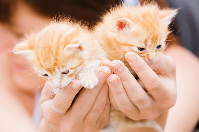 Dois gatinhos nas mãos foto de stock royalty free