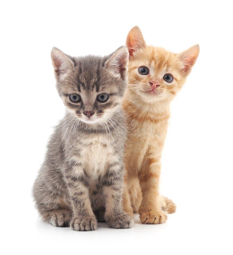 Dois gatinhos pequenos imagens de stock