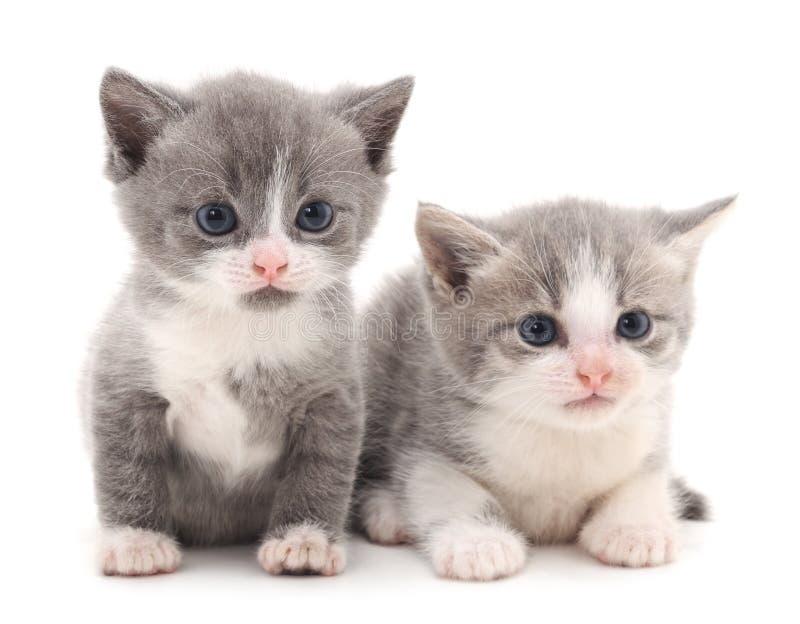 Dois gatinhos pequenos fotos de stock royalty free