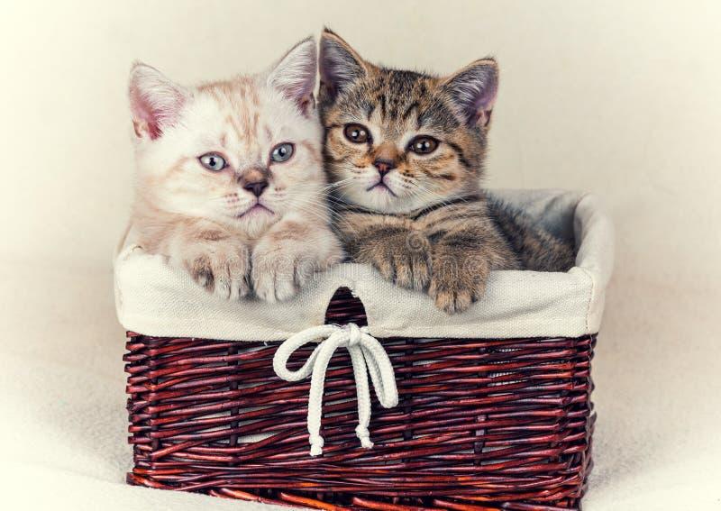 Dois gatinhos pequenos imagens de stock royalty free