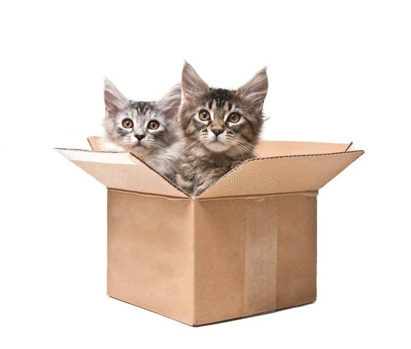 Dois gatinhos pequenos em uma caixa de cartão fotografia de stock royalty free