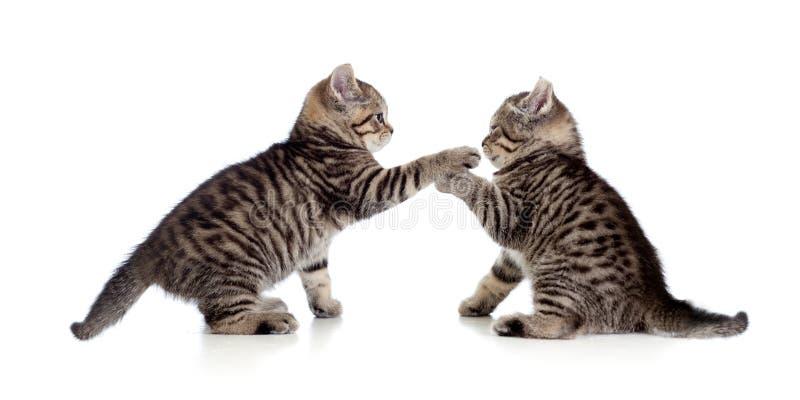 Dois gatinhos pequenos que jogam junto imagem de stock
