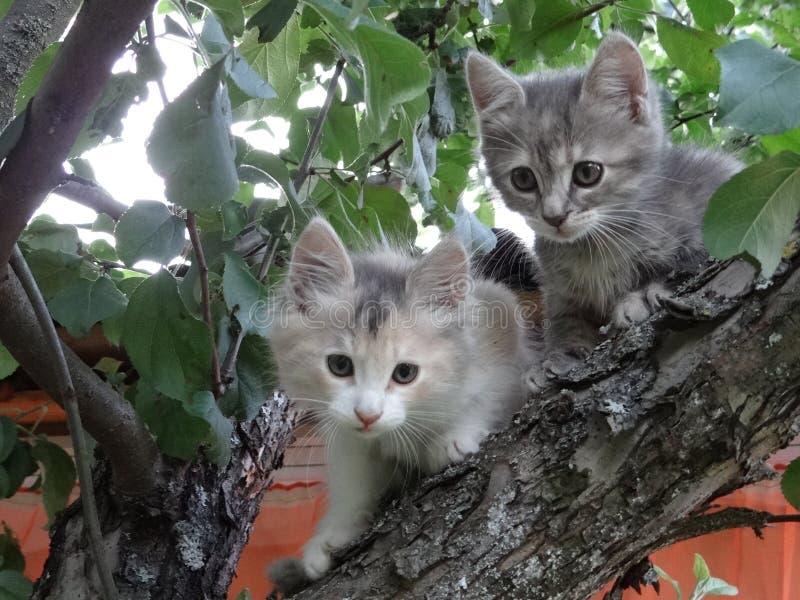 Dois gatinhos pequenos que sentam-se altamente em uma árvore imagens de stock