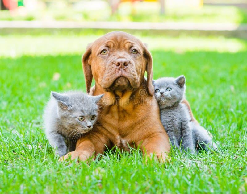 Dois gatinhos pequenos que sentam-se na grama verde com o cão de cachorrinho do Bordéus fotos de stock royalty free