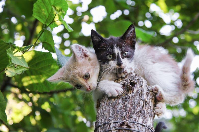 Dois gatinhos que sentam-se na árvore imagem de stock royalty free