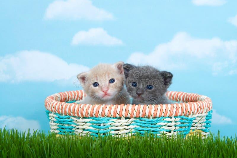 Dois gatinhos velhos de um mês em uma cesta da mola na grama verde alta imagens de stock