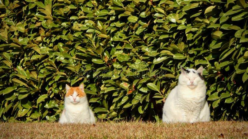 Dois gatos fotos de stock