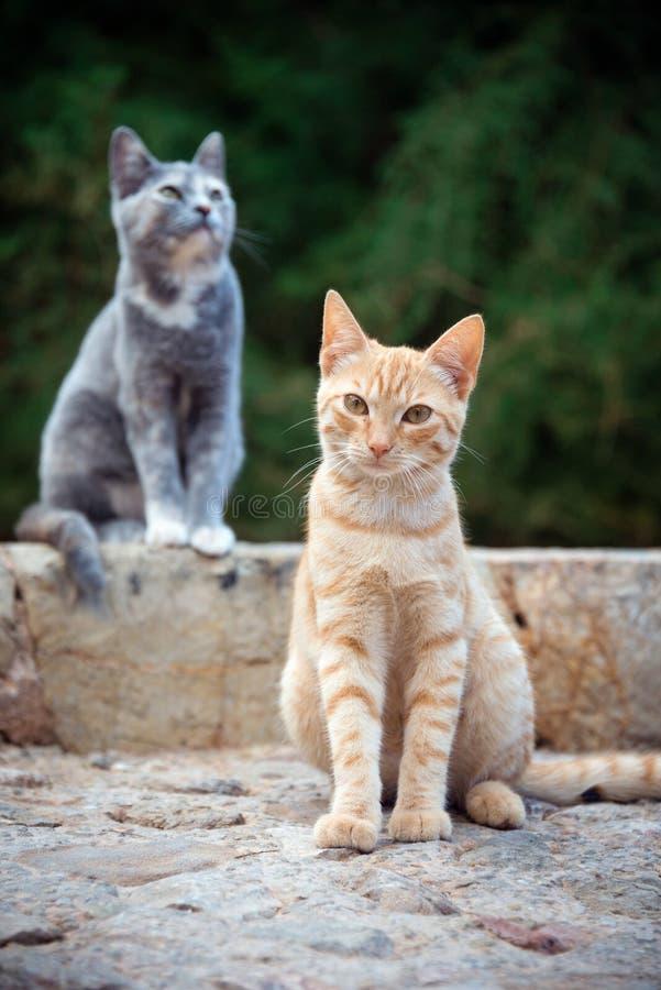 Dois gatos bonitos imagem de stock